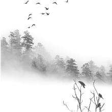 Birds-in-the-Mist