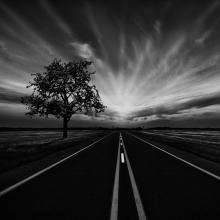 Long-Straight-Road-and-Tree