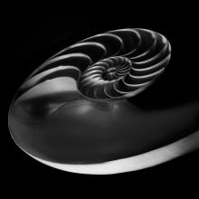 Nautilus-22-Angle-Black-and-White