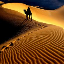 Desert-and-Camel