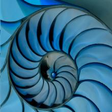 Nautilus-Vertical-Blue